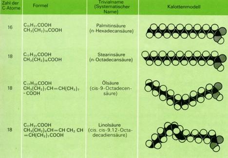 Fette Lipide Einteilung der Fette: Tierische Fette